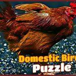 Domestic Birds Puzzle
