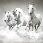 Horses Puzzle